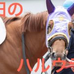 【園田競馬】2019.8.29 フェンネル出走