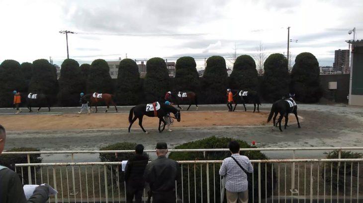 姫路競馬場 2020年1月28日 第3Rパドック