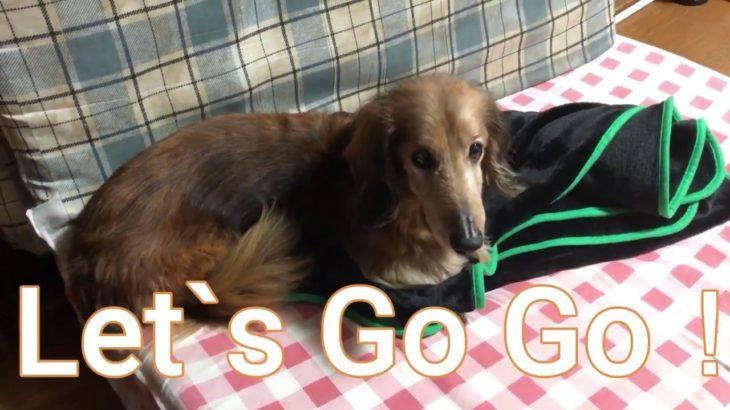 犬がパチスロ打ってみた!#1 (犬、ジャグラー)