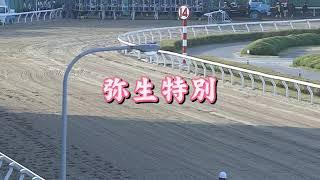 【浦和競馬】弥生特別2020 面白い決着が待っていた