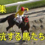 競馬 抵抗する馬たち