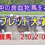 サラブレッド大賞典【金沢競馬2020予想】連勝中の良血牝馬を本命!