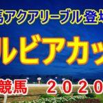 サルビアカップ【川崎競馬2020予想】2冠馬アクアリーブル登場!?