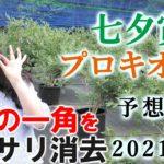 【競馬】七夕賞 プロキオンS 2021 予想(日曜メインの五稜郭Sはブログで)ヨーコヨソー